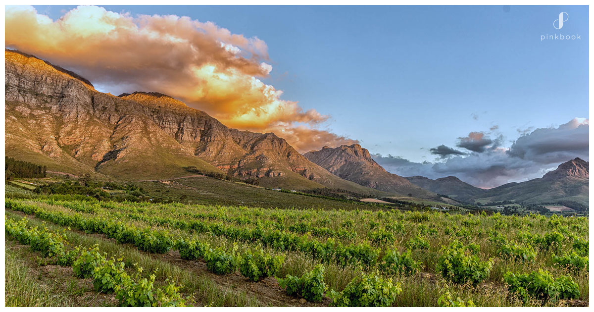 destination-weddings-in-south-africa-winelands