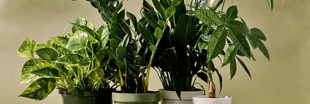 Choose a Plant