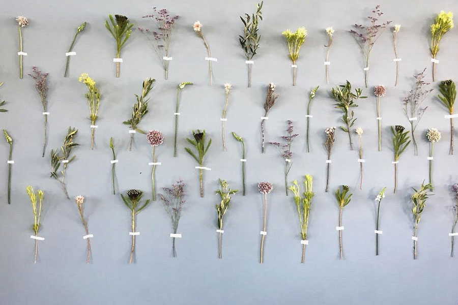 Naak Botanical Studio