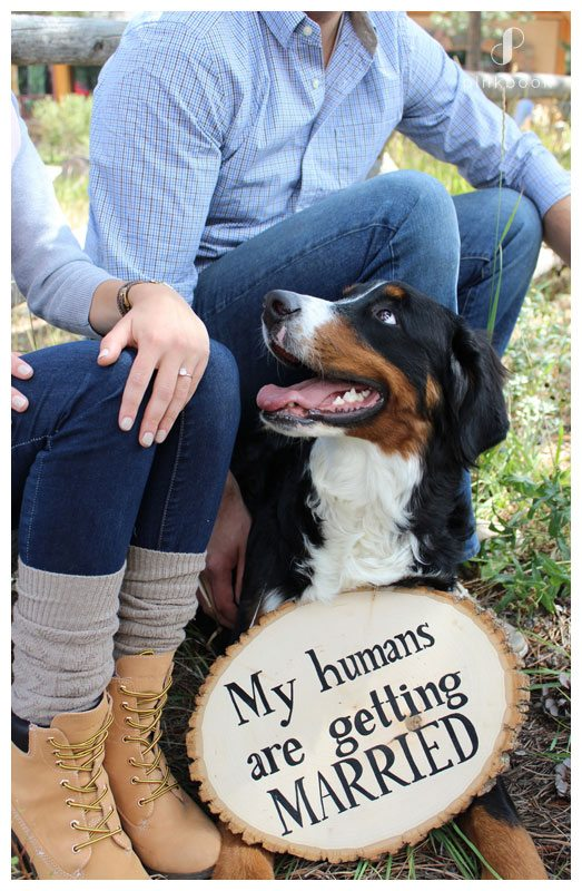 My Humans Are Getting Married Dog