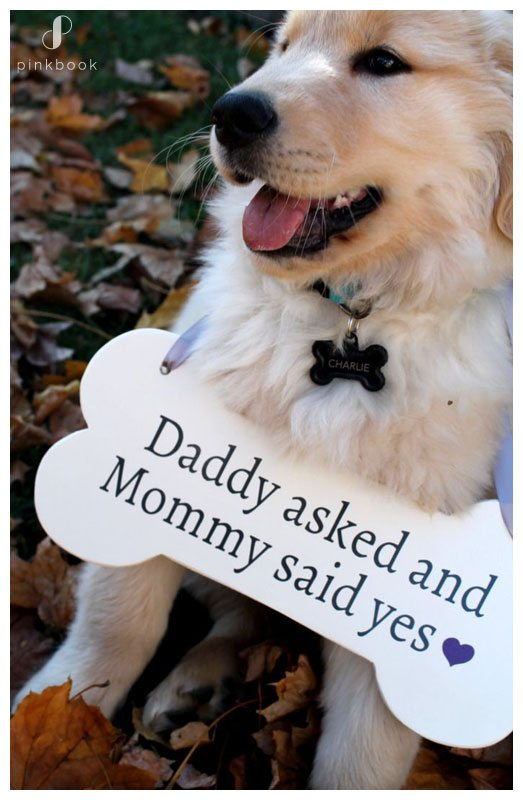 She Said Yes Labrador