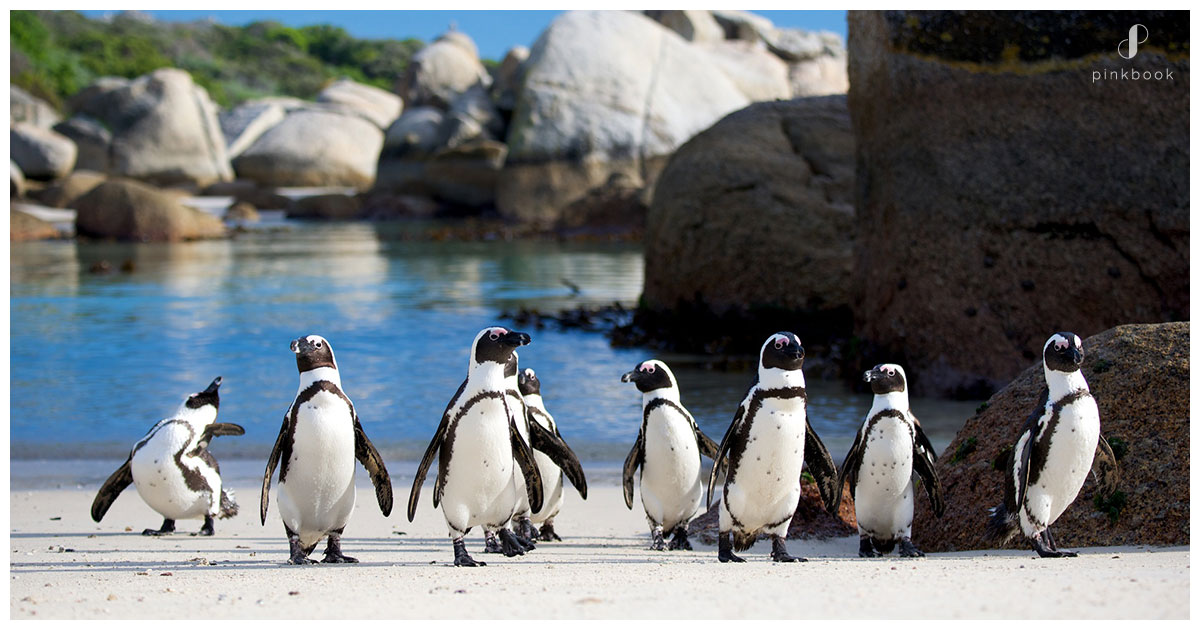 Explore-Cape-Town