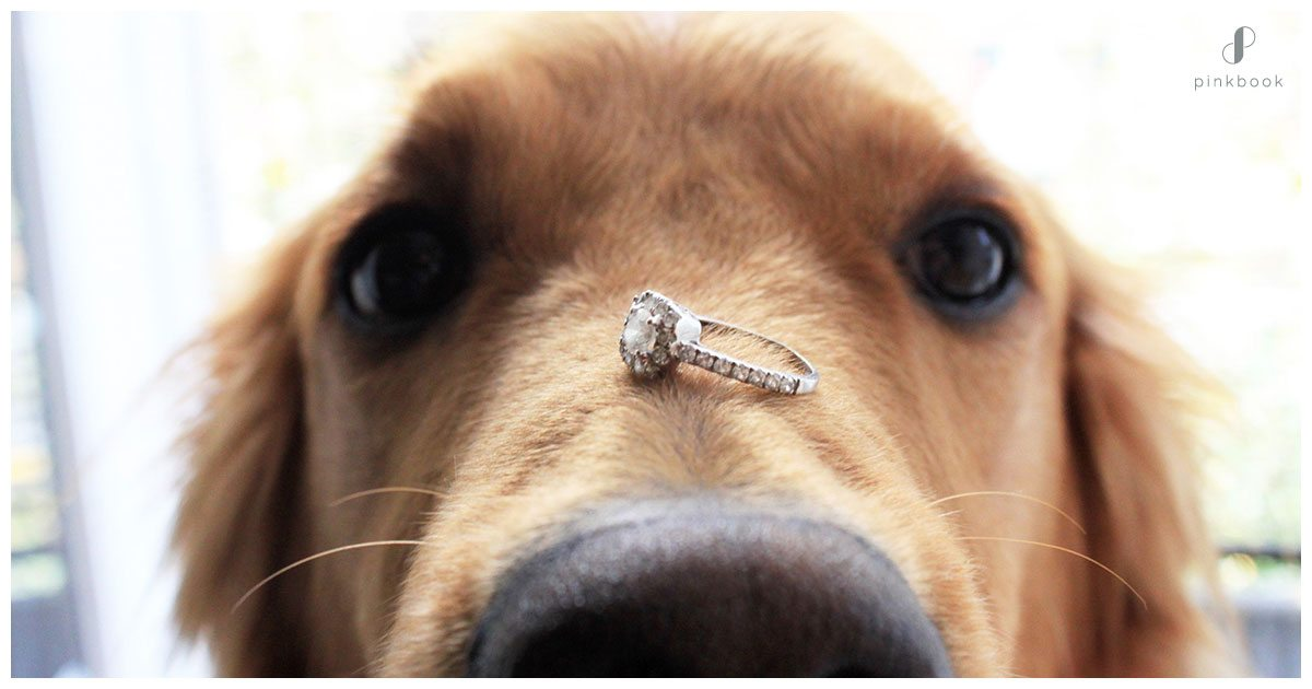 proposal-ideas-pets