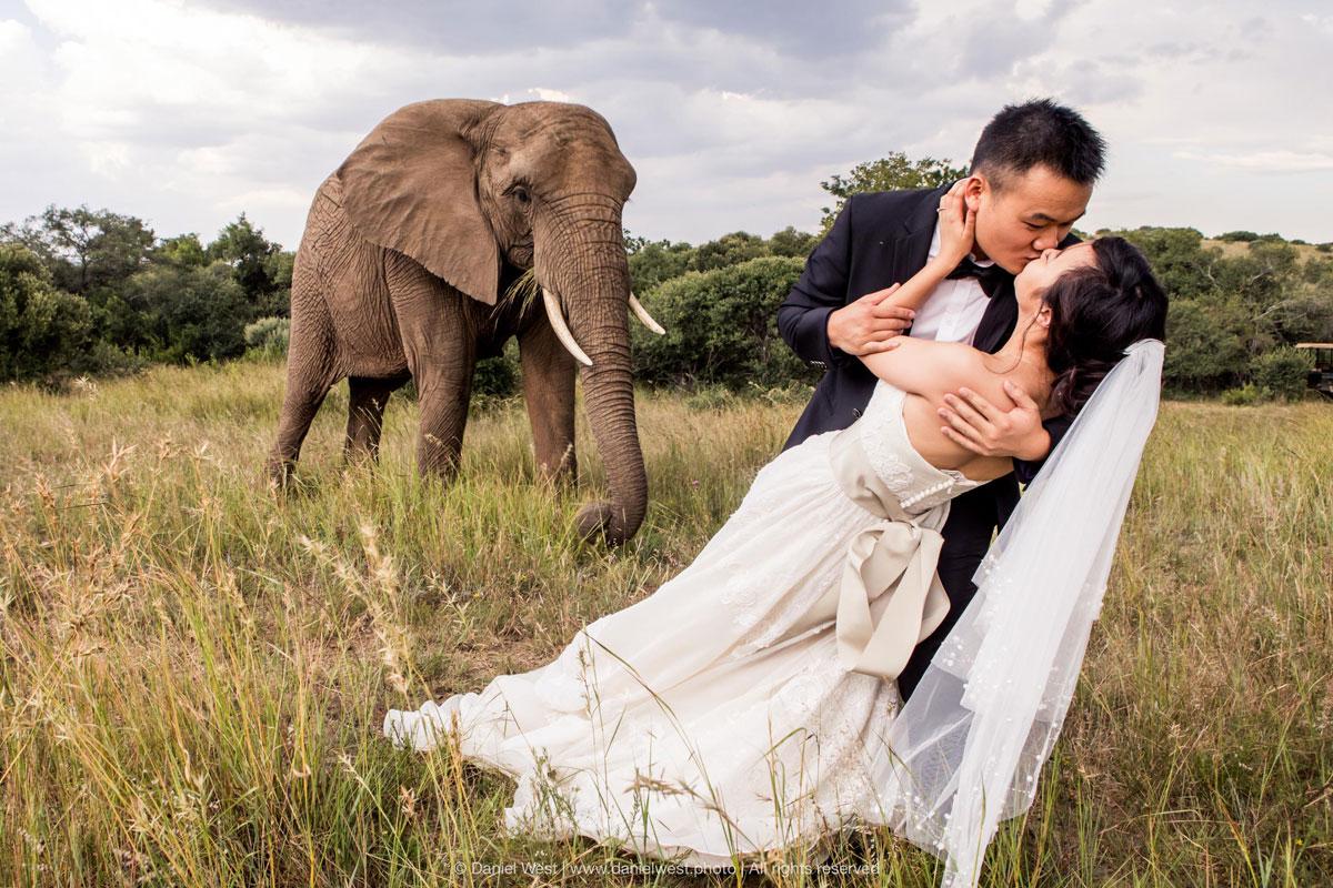 African Safari Wedding with Elephants