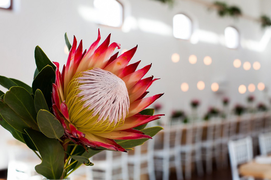 Amy Cottle's Events (Pty) Ltd - Wedding Planners Cape Town